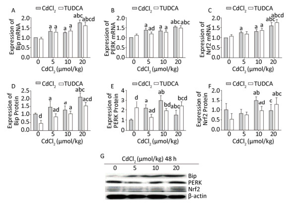 Induction of Endoplasmic Reticulum Stress by Cadmium and Its